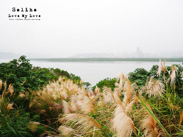 社子島溼地水鳥自行車道 (38)