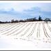 A Wintry Michigan Cornfield by sjb4photos