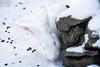 Automatik ade - weißer Hase im Schnee by Eleleleven