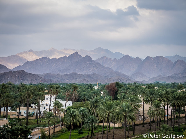Date palms and the Hajar Mountains
