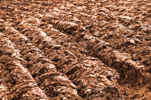 Ridge and Furrow - Ploughed soil in Devon