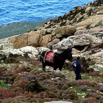 Ikaria's remotest hinterland 09 - the man and his mule