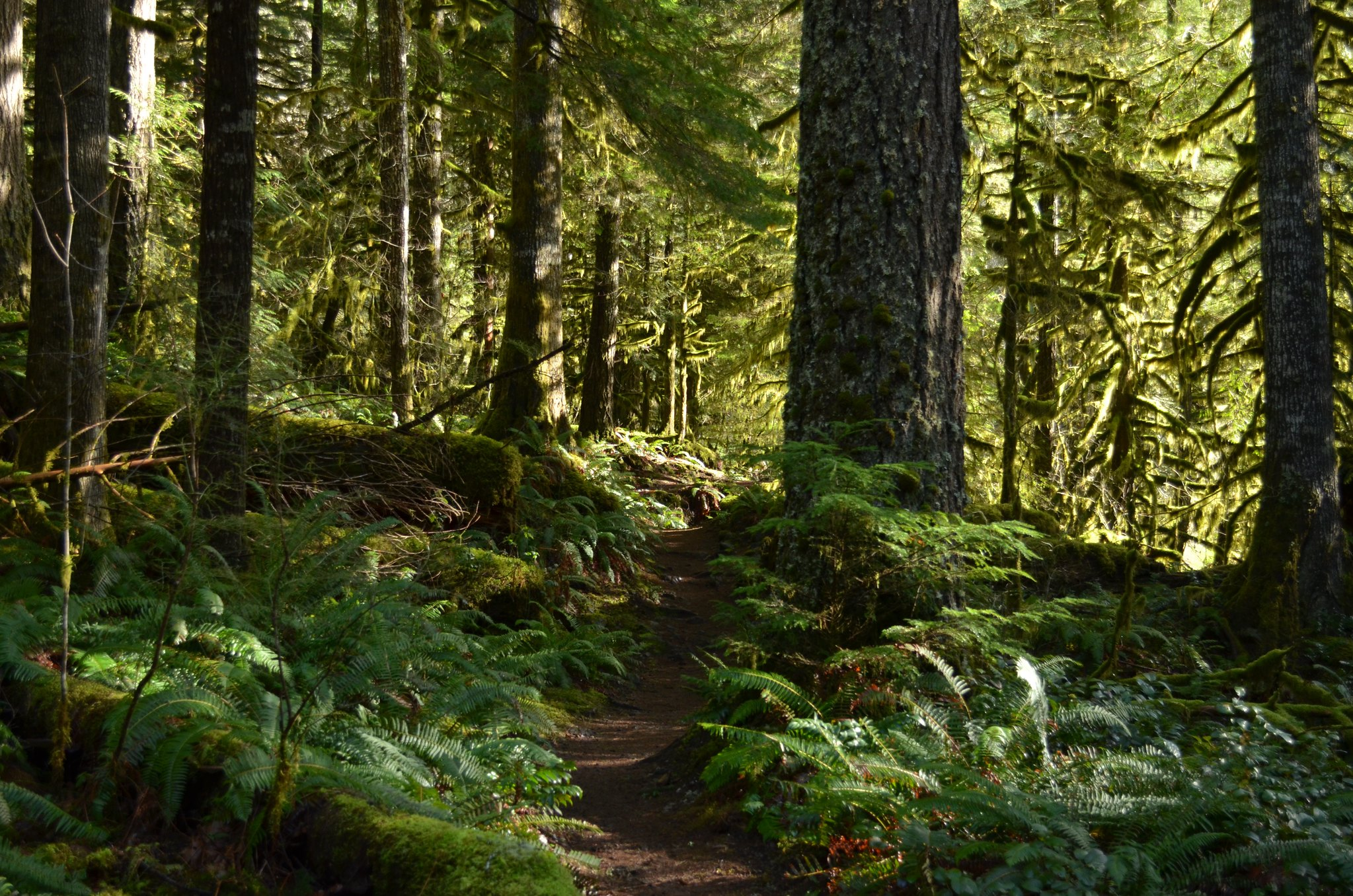 Salmon River Trail, Mt. Hood National Forest