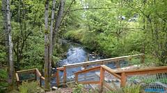 Kelsey Creek | Bellevue.com