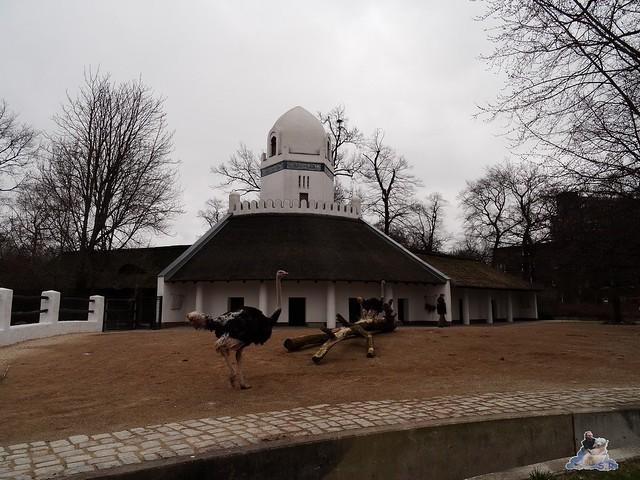 Zoo Berlin 18.03.2016  049