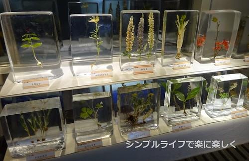 紋別、流氷センター・氷の植物園