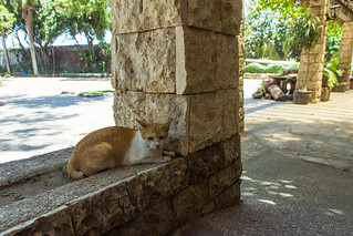 Image of  Fort San Pedro. cats philippines cebu canon60d canonefs1585mmf3556isusm