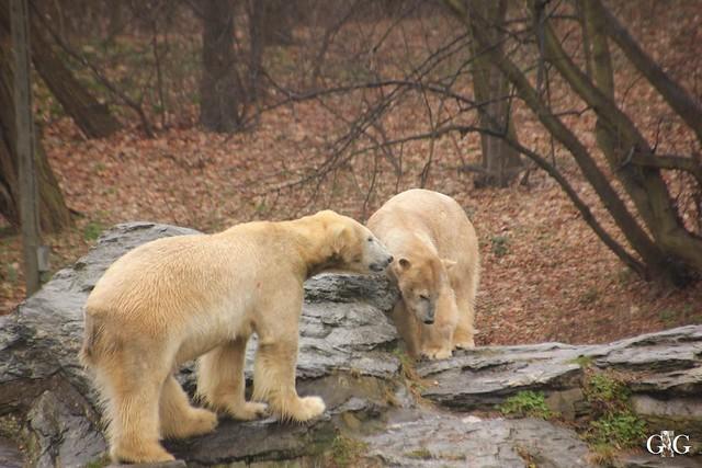 Nieselregen im Tierpark Friedrichsfelde 25.03.2016131