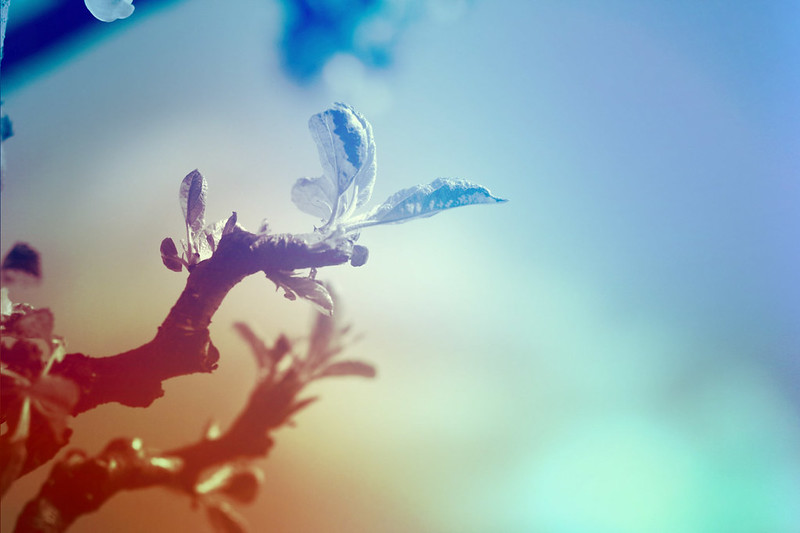 blur-dreamy-texture-texturepalace-16