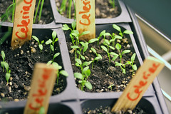 seedlings IMG_5253 - Copy