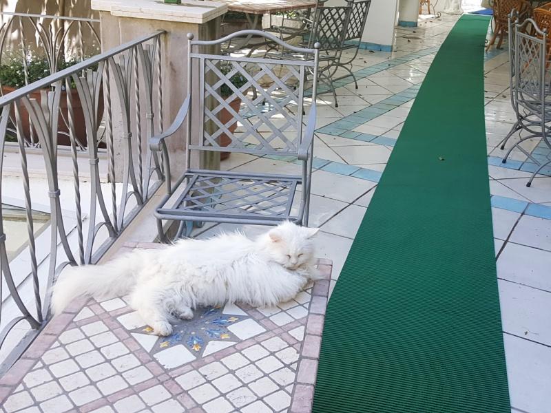 Gatto Bianco Capri