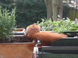 Eichhörnchen7