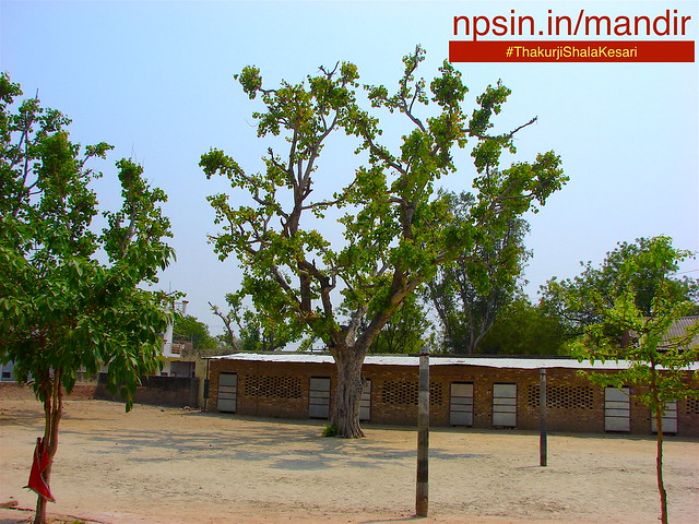 Dharmshala, satsang hall, an educational intitution a primary school and playground with Peepal Tree in center