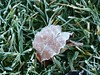 Woke up to see frost everywhere. Coldest morning this yeat, 28F/-2C.