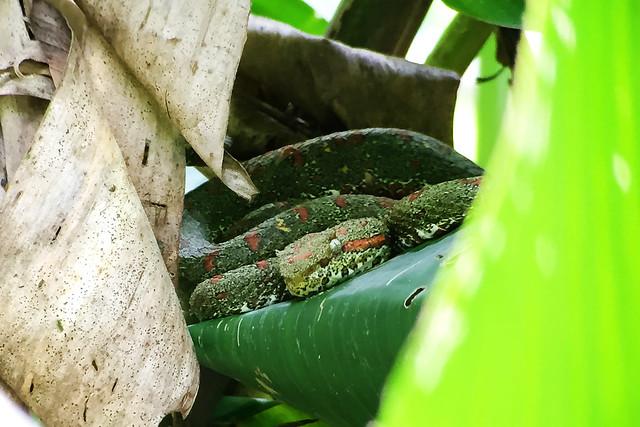 Manuel Antonio Natural Park