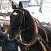 <p><a href=&quot;http://www.flickr.com/people/93892755@N02/&quot;>kaprysnamorela</a> posted a photo:</p>&#xA;&#xA;<p><a href=&quot;http://www.flickr.com/photos/93892755@N02/24630427000/&quot; title=&quot;Horse Harness&quot;><img src=&quot;http://farm2.staticflickr.com/1588/24630427000_10048df09c_m.jpg&quot; width=&quot;240&quot; height=&quot;169&quot; alt=&quot;Horse Harness&quot; /></a></p>&#xA;&#xA;