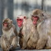 monkeys by * Yumi *