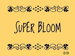 Buzzword Bingo: Super Bloom
