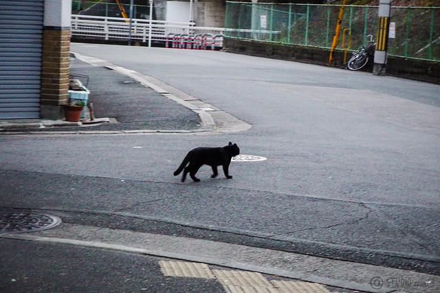 Today's Cat@2016-02-04