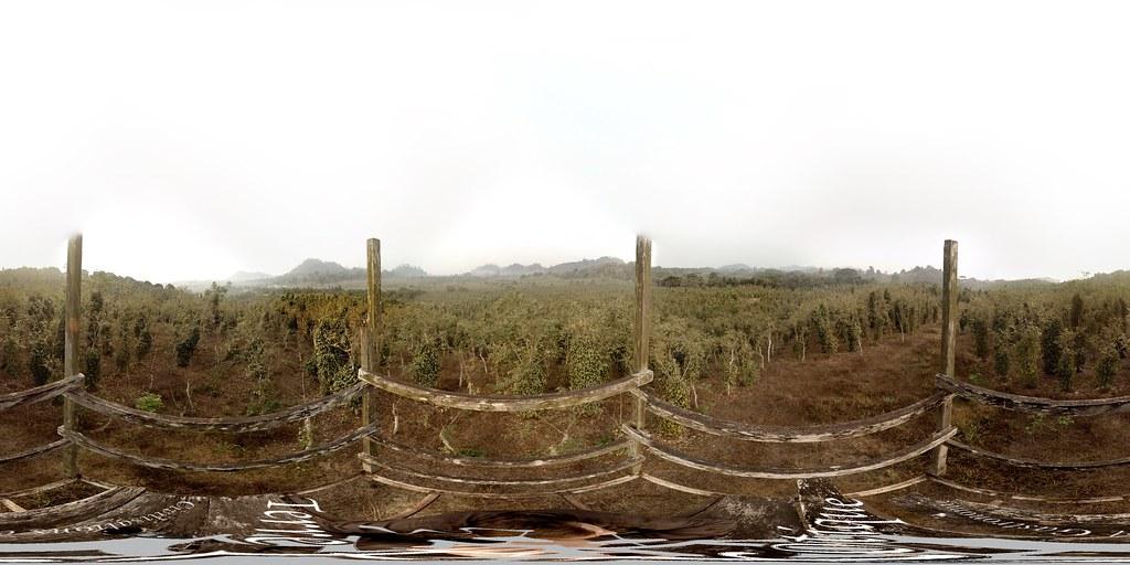 Plantation de poivre de Penja