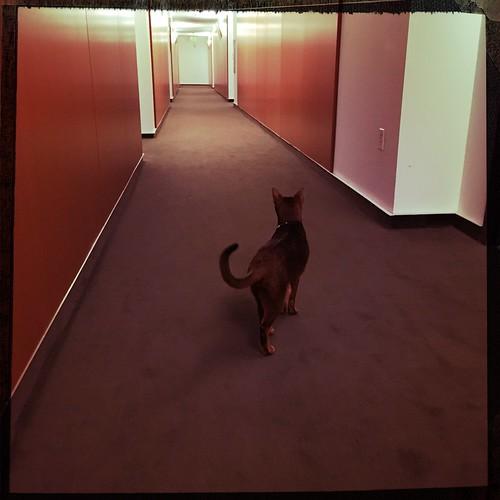 hipstajakehallway8