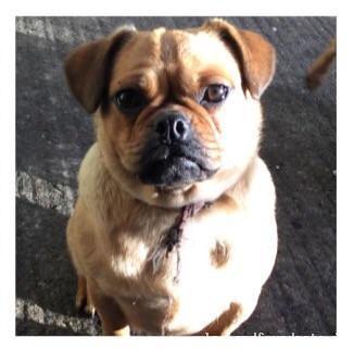 Sun, Feb 21st, 2016 Lost Female Dog - Abbeydorney, Tralee, Kerry