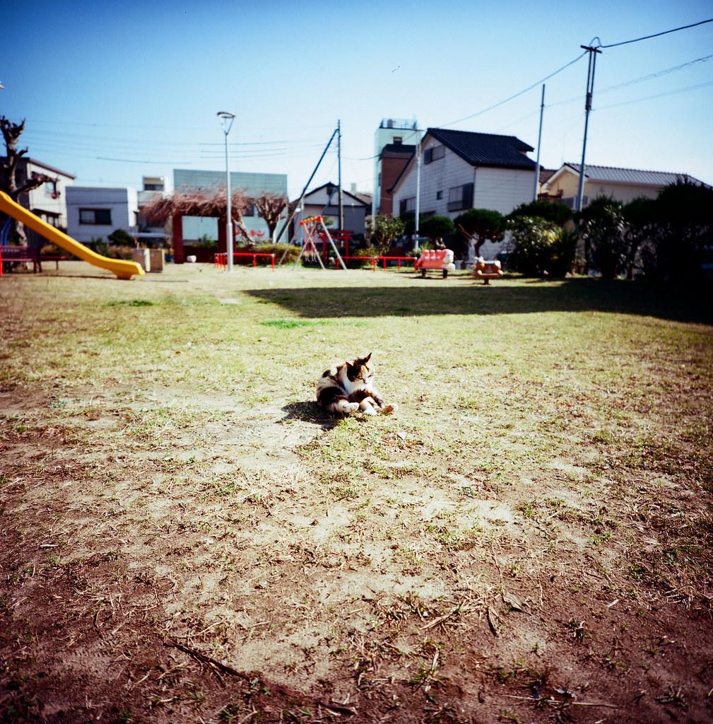 銚子市 Choshi, Japan / Kodak Pro Ektar / Lomo LC-A 120 2016-02-05 銚子真的是一個好悠閒的小鎮,如果哪一天想要消失一段時間的話,我很想再次來到這裡流浪!  Lomo LC-A 120  Kodak Pro Ektar 100 120mm  8281-0002 Photo by Toomore