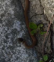 Tiny Snake