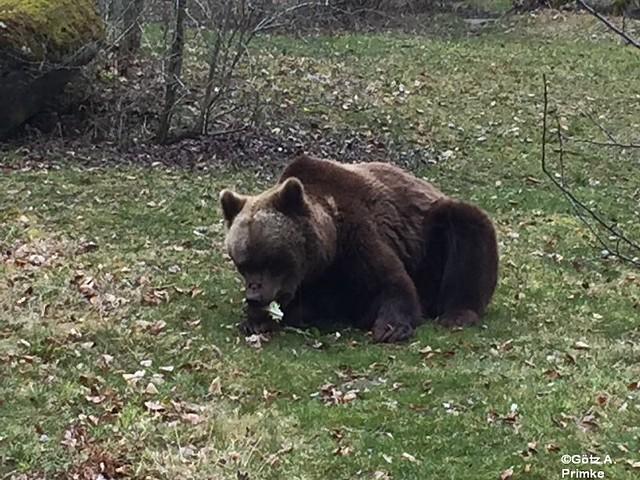 Muenchen_Ostern_2016_Tierpark_Hellabrunn_004