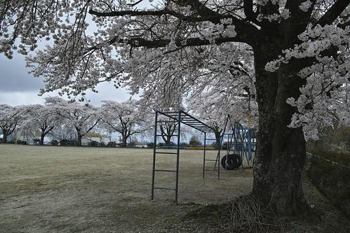 Silence of spring  (SIGMA DP1 Merrill)