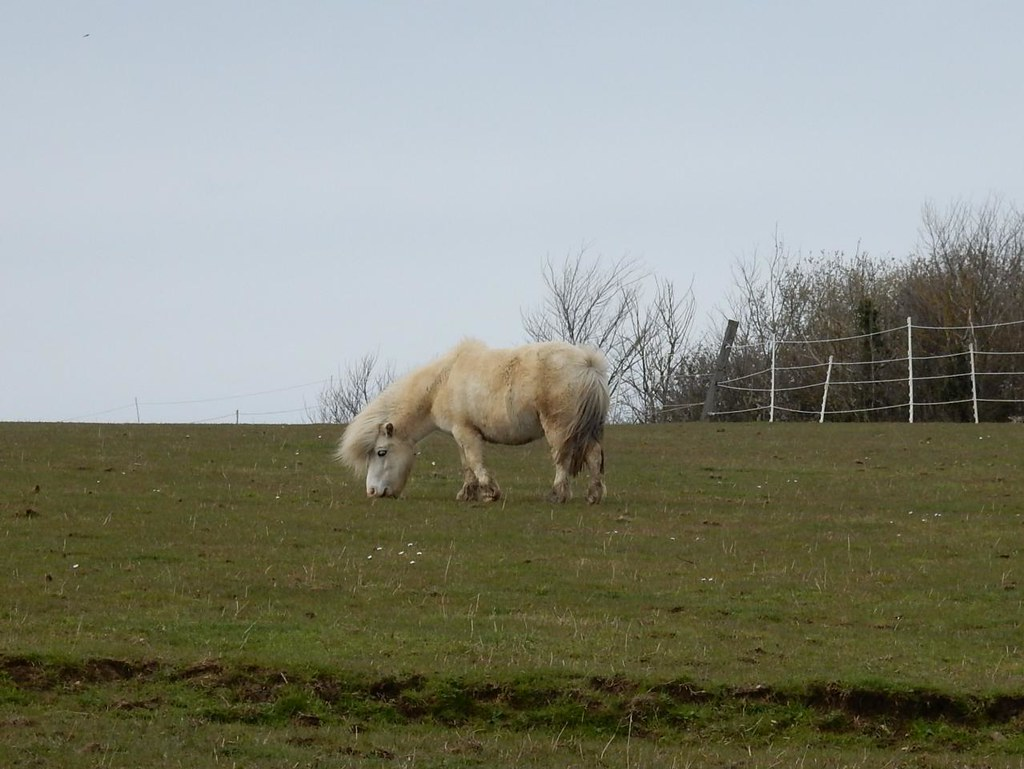 Little horsey Harlington Circular