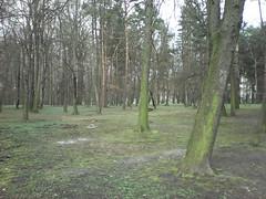 myPhone C-Smart III przykładowe zdjęcie | techManiaK.pl