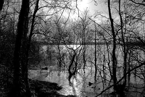 millenniumforest_066
