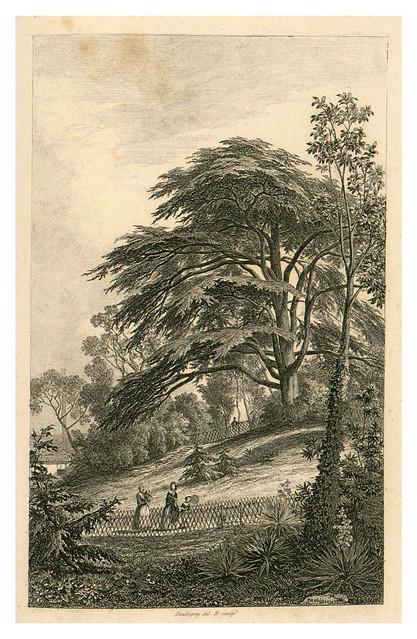 019- Otra vista del cedro del Libano-Le Jardin des Plantes-1842-P. Bernad y otros- Universitè de Strasbourg