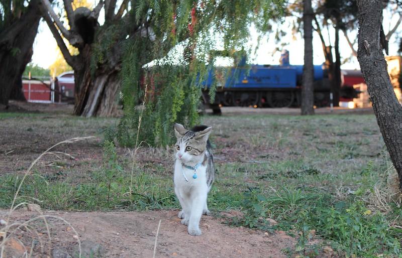 Railway cat, Maldon