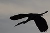 ...silhouette in flight...