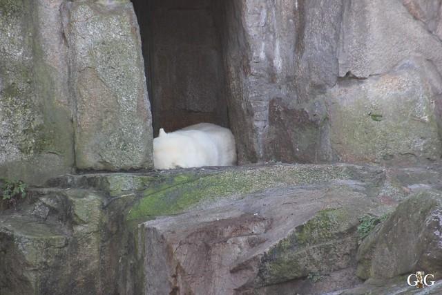 Heiligabend im Zoo Berlin6