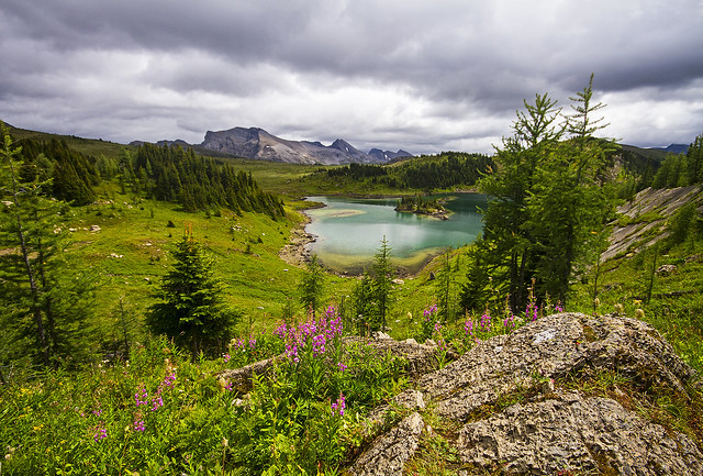 Sunshine Meadows - Rock Isle Lake