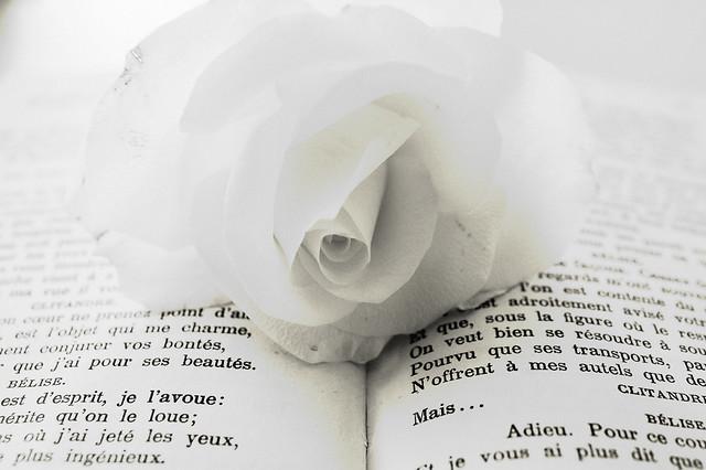 la rose et la littérature