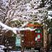 雪の夢 by nuduca