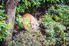 Today's Cat@2016-03-16