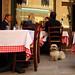 Dog at italian restaurant by zanin.simone
