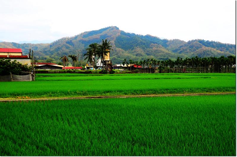 美濃稻田與彩竹(黍頂山)