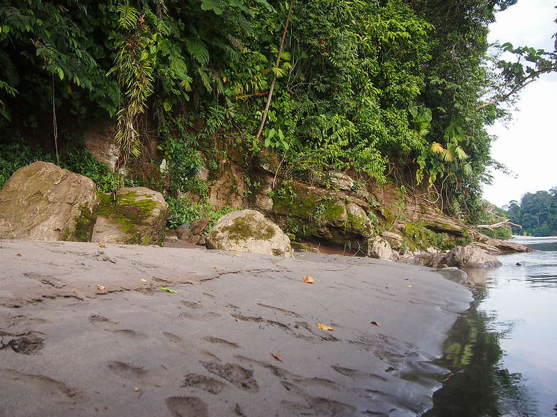 Napo River in the Amazon in Ecuador