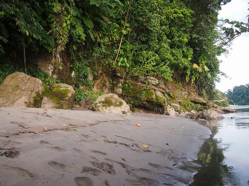 Napo River in the Amazon in Ecuador
