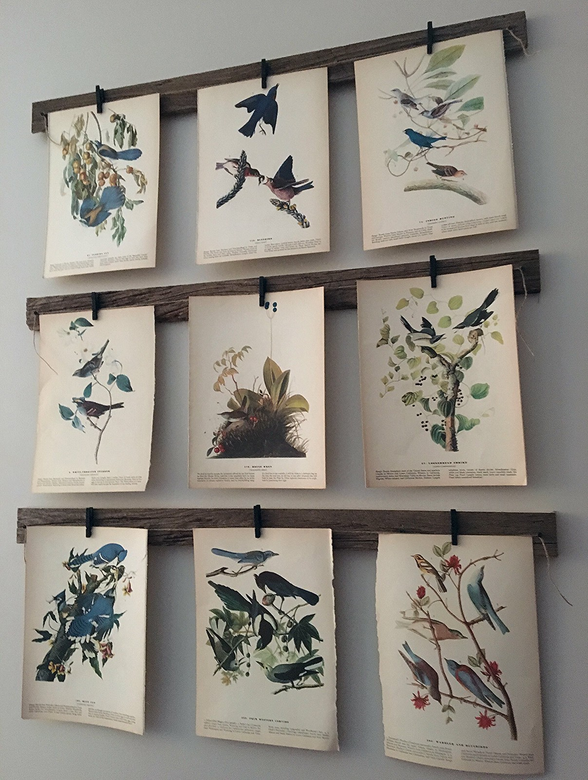 Bird Print Gallery Wall Project