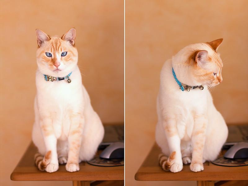 Cotton the cat by kotova eugenia