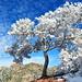 Snow Tree by chadbach