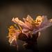 Flower Macro by Bálint Bartha