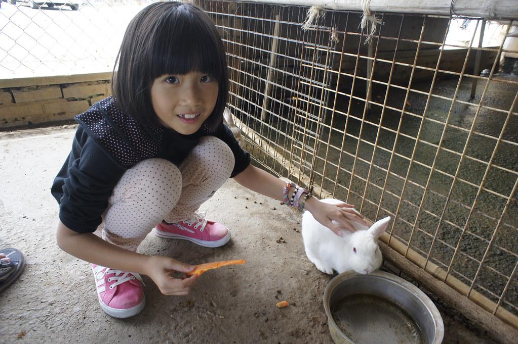 台南市柳營乳牛的家 (46)